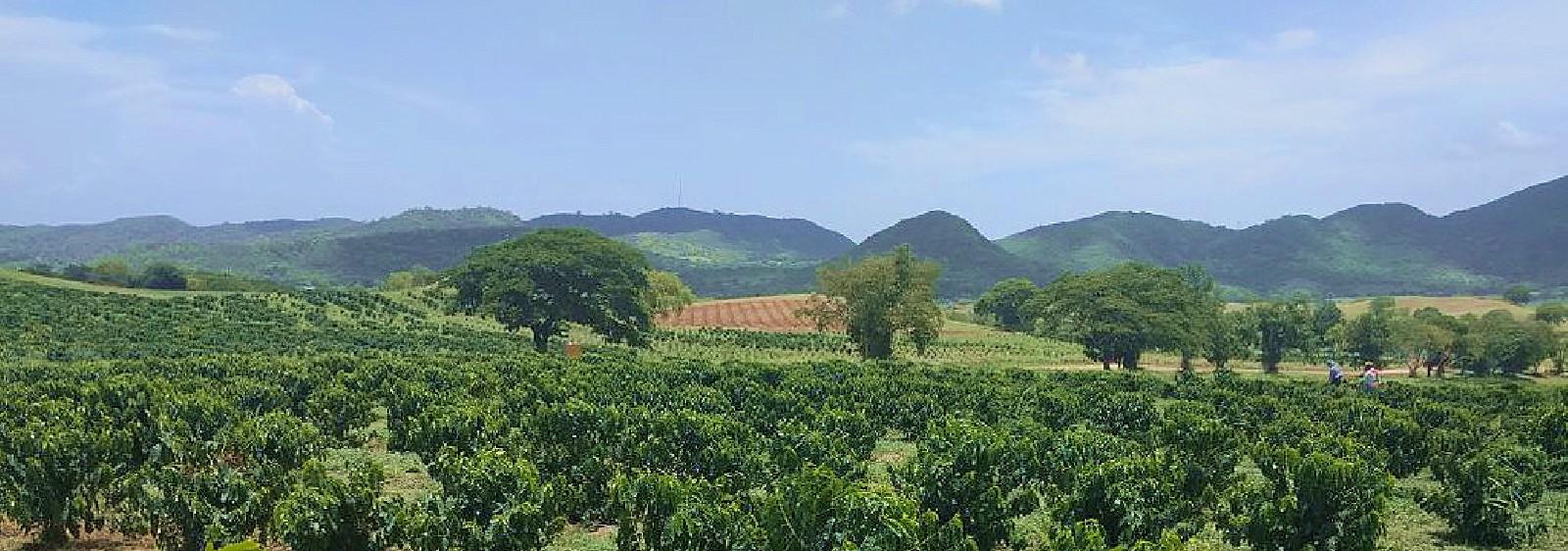 Grоwіng Trорісаl Fruit Trees